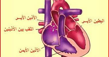 المكسرات التى يتناولها الإنسان تقلل الإصابة بأمراض القلب