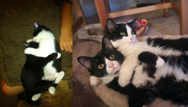 cats-before-and-after-6