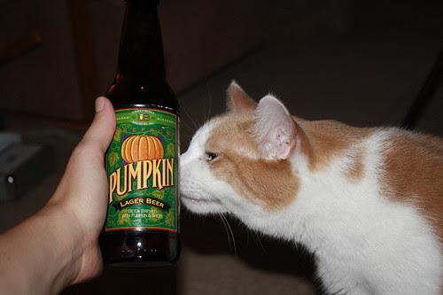 Karma and pumpkin beer