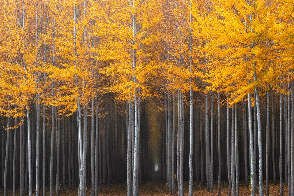 10 fairy tale forests..