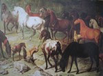 cavalos-peninsulares2