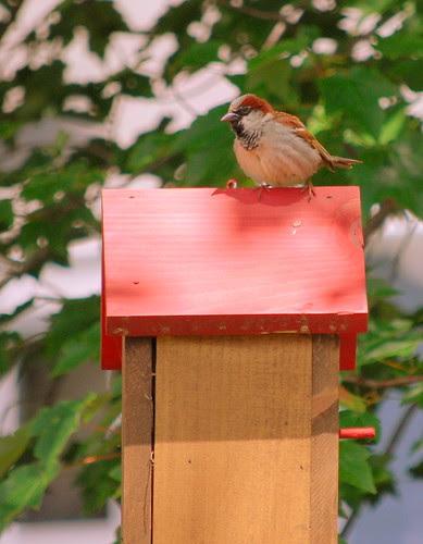 little bird on birdhouse