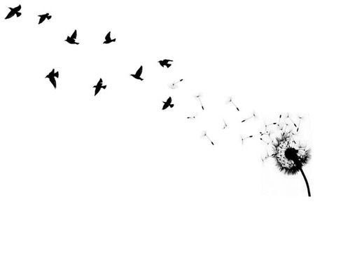 Resultado de imagem para pássaros tumblr