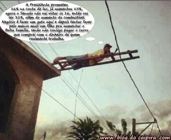 Gato na energia elétrica