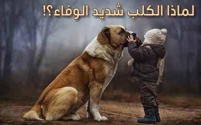 أسرار و حقائق لماذا يعتبر الكلب شديد الوفاء