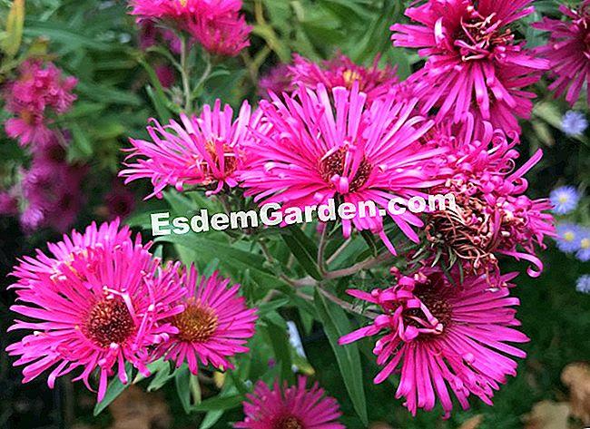 Chantillyのcoup De Coeur彼の庭に持っている7つの花 すべての