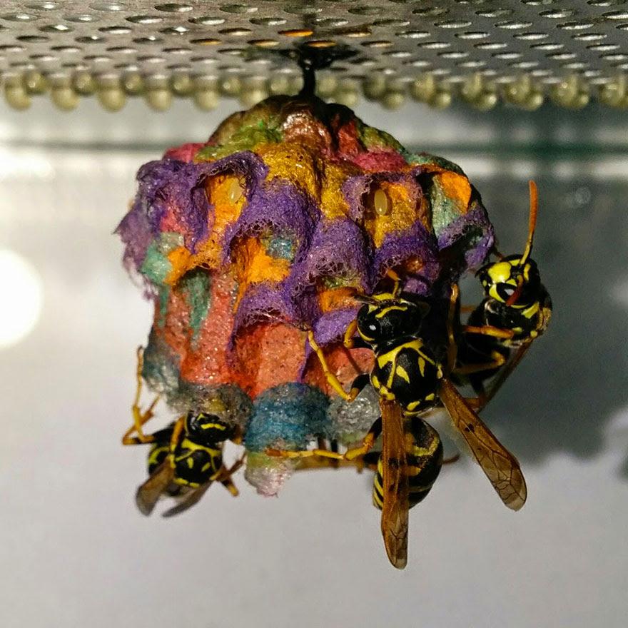 nidos-avispa-cartonera-colores-mattia-menchetti (5)