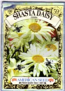 SHASTA DAISY SEED PACKET Pictures, Images and Photos