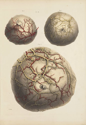 Arteries and Veins (Cooper, 1840)