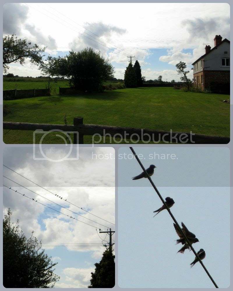 Jimjams - ZIZO 35 - Scavenger Hunt #3 Birds on a Wire