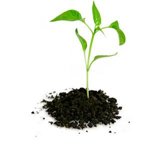 Start little and grow a garden