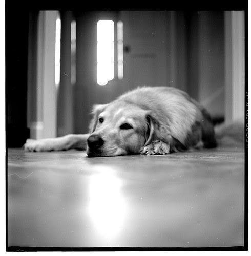 it's a dog's life, i wanna lead a dog's life