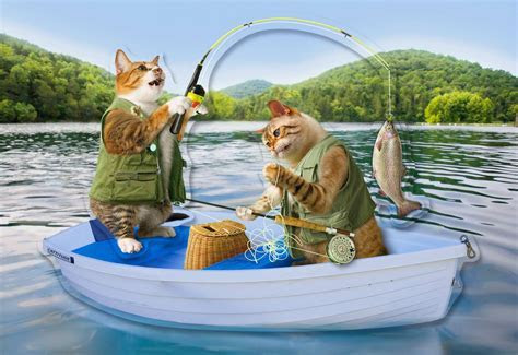 Cute Cats Fishing Funny Father's Day Card for Dad