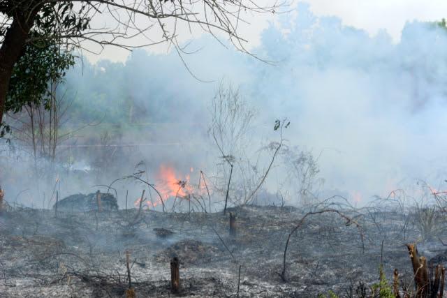 Contoh Artikel Fakta Dan Opini Tentang Kebakaran Hutan