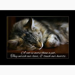 Quotes 3 256 All New Inspirational Quotes About Losing A Cat