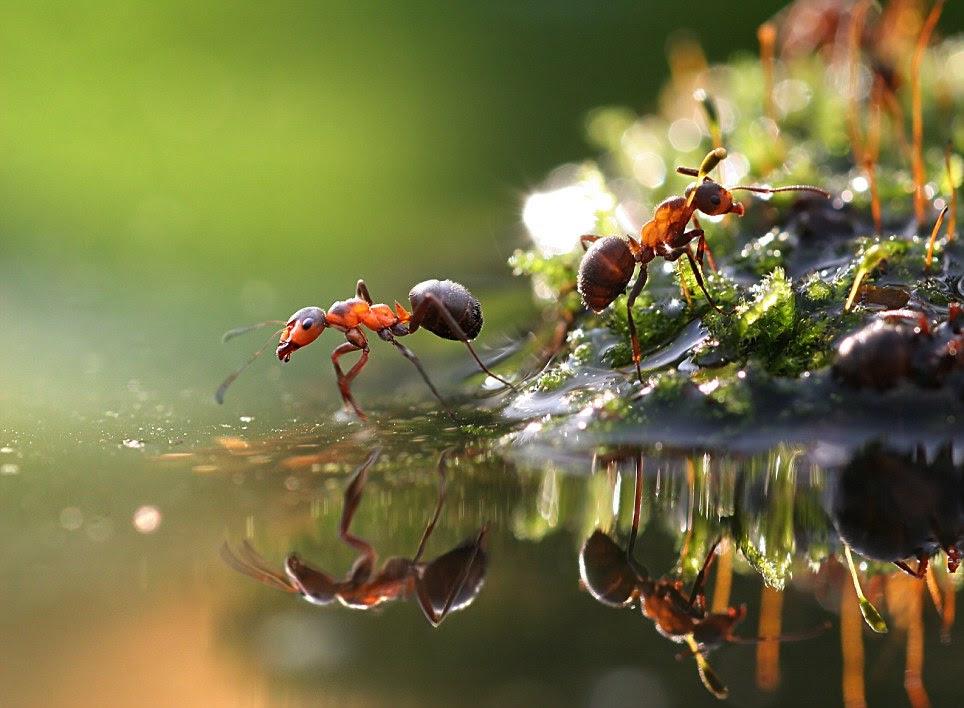 insectos .