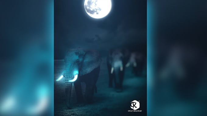 Elephant Photoshop Manipulation | Download Free Stock