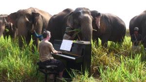 http://www.musicoguia.com/musica-para-elefantes/