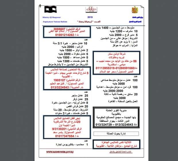 بالتفاصيل.. الحكومة تعلن عن 12 ألف فرصة عمل جديدة للشباب بـ 4 الآف جنيه