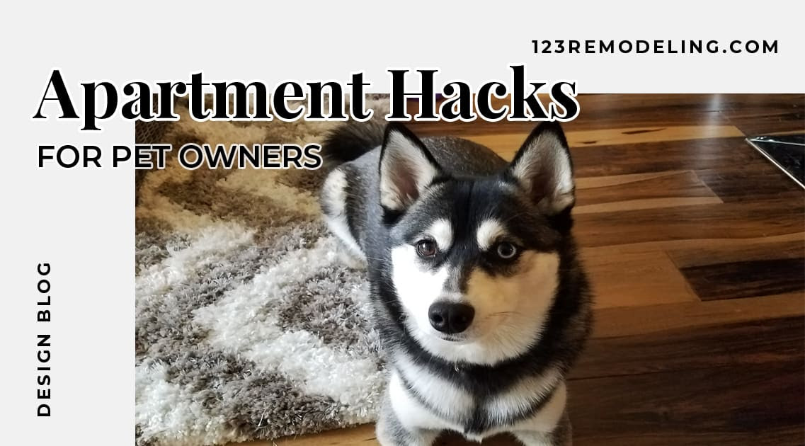 Apartment Hacks For Pet Owners 123 Remodeling