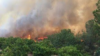 El foc de Carcaixent s'ha declarat en una zona de difícil accés i avança per les fortes ràfegues de vent de ponent