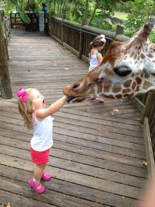 Broussard Louisiana, gabriel giraffe, giraffe eats little girl's arm, little girl and giraffe, girl scared of giraffe, toddler at zoo