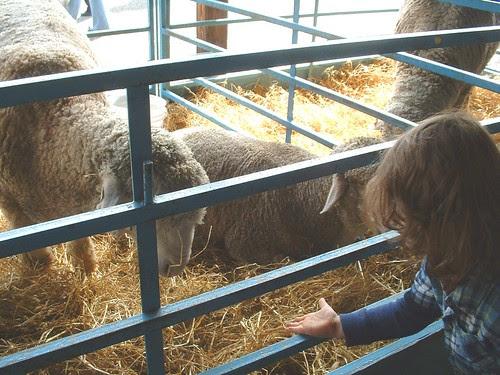 NY sheep and wool 2013 2