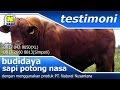 Penggemukan Sapi Potong dengan Vitamin Ternak NASA di Jomblangan, Banguntapan, Bantul, Yogyakarta milik kelompok tani Andhini Sakti.