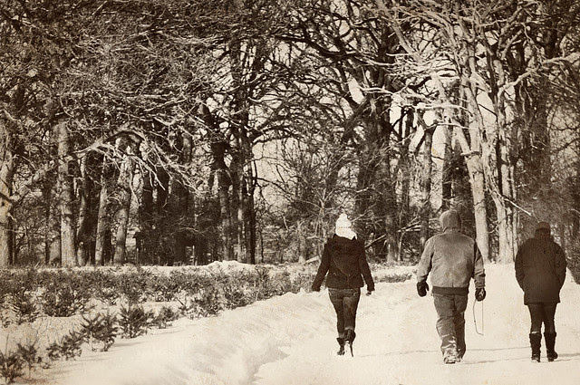 ❄ Family Tradition: Fetching the Tree ❄