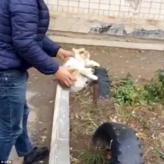 The cat appears quite dazed as it is picked up and then used as a brush to clean the man's shoes