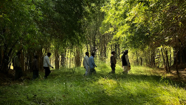 The same farmland today revived by integrated bamboo plantations. Photo Courtesy of INBAR