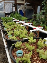 Aquaponic Farming Systems