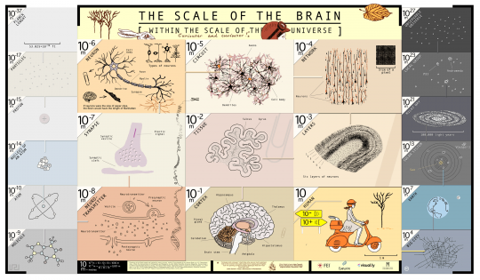 The Scale of The Brain Within The Scale of The Universe