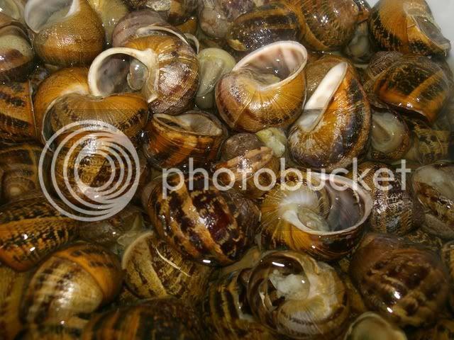 boiled snails