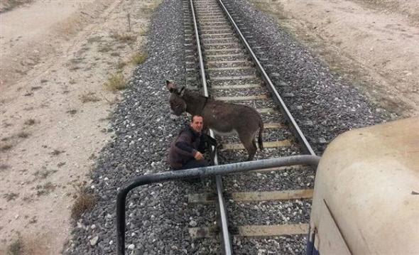 ΦΩΤΟ-Έδεσαν γαϊδουράκι σε ράγες τρένου