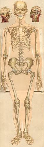 anatomie gmfemm10