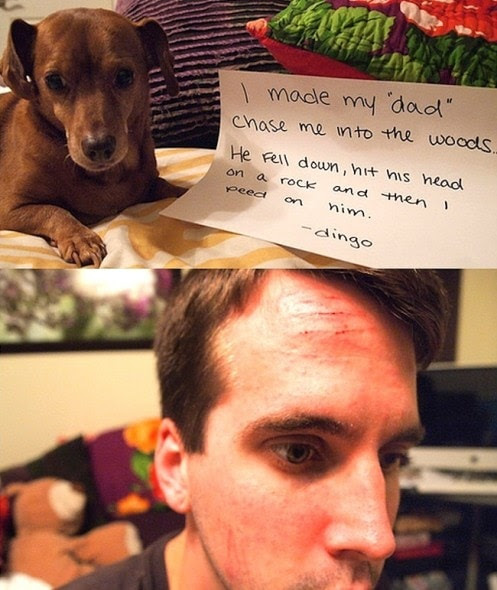 6.17.16 - Dog Shaming - Father's Day Edition23