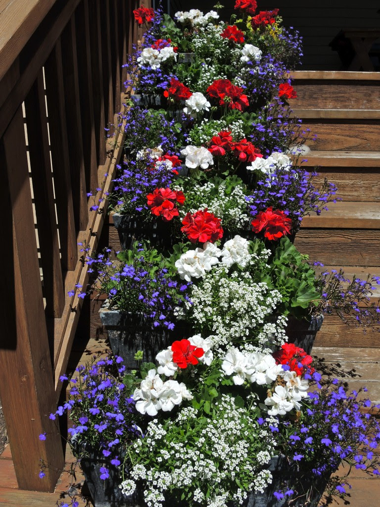 Hooray For The Red White And Blue Patriotic Plants For The Fourth Of July Good Earth Plants