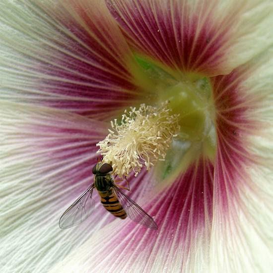 όμορφα λουλούδια (3)