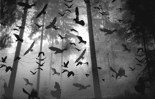 THE BIRDS SENSE THAT SOMETHING IS VERY WRONG. THE TOWN OF OASIS IS DOOMED UNLESS THE DEAD ARE STOPPED. THE DEAD GAME.