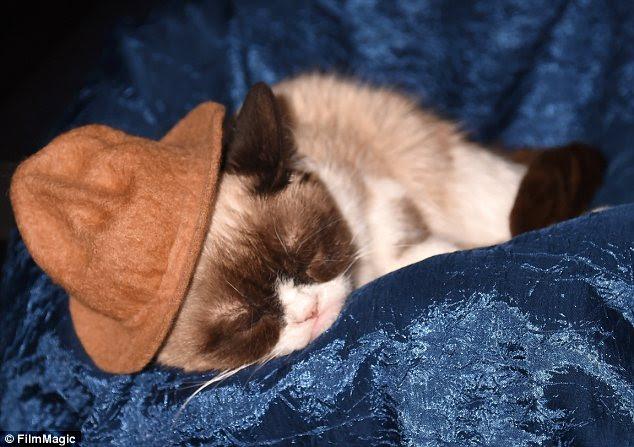 Having a terrible time: The insouciant feline was so unimpressed that she fell asleep on her velvet beanbag