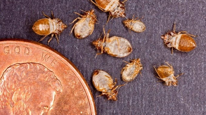 Bedbug Extermination Guide for your Apartment