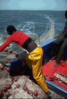 Senegal's artisanal fear licences to foreign trawlers will destroy their livelihoods. / Credit: UN Photo