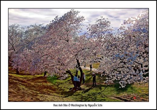 008 Mùa Xuân Washington