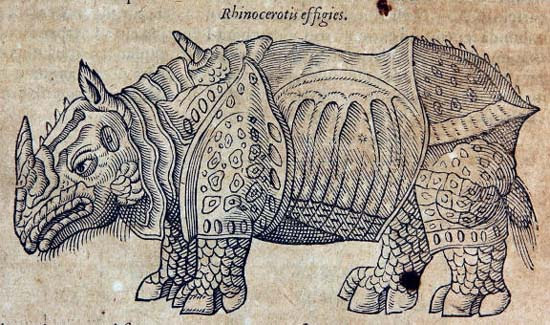 The rhinoceros of Dürer in Ambroise Paré