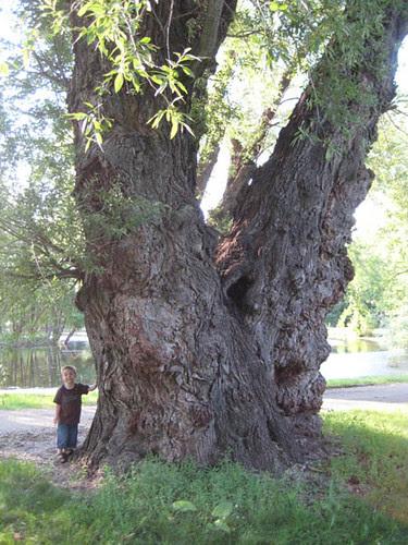 Nick & the big tree - 1