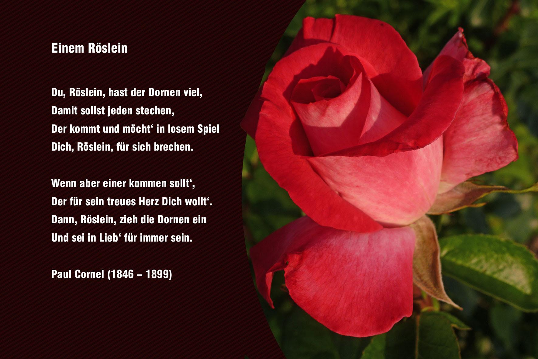 Geburtstag Gedicht Rosen