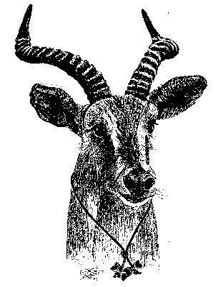 Wood Badge Antelope