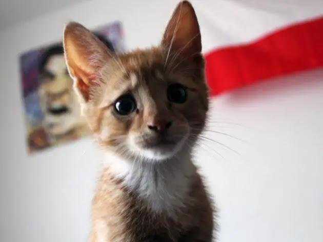 gato-triste-6