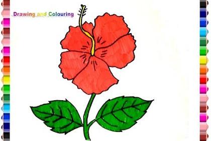 Contoh Gambar Sketsa Bunga Kembang Sepatu